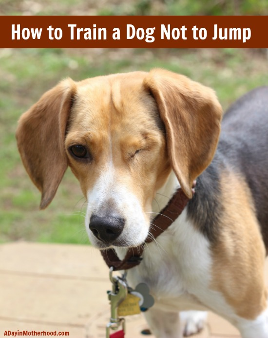 how to train a dog not to jump on you