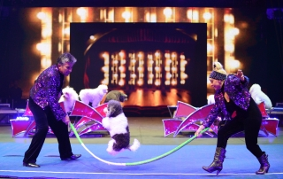 Watch the dog thrill at the UniverSoul Circus