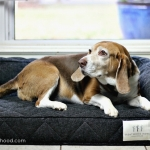 WIN a Brentwood Home Orthopedic Dog Bed ($200 ARV)