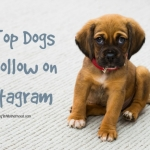 The 10 Top Dogs to Follow on Instagram