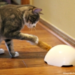 Automatic Cat Toys that Your Kitty Can Play with All Day Long