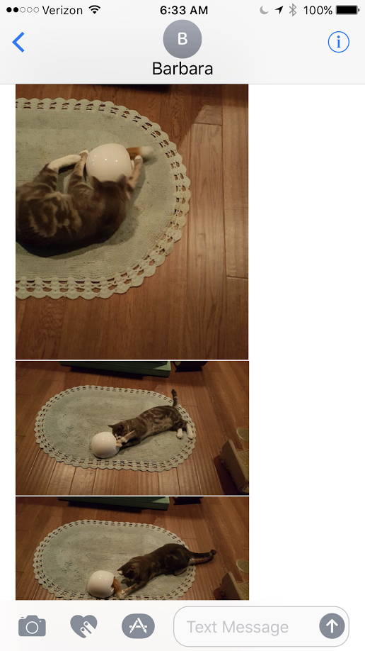 Automatic cat toys are fun to share