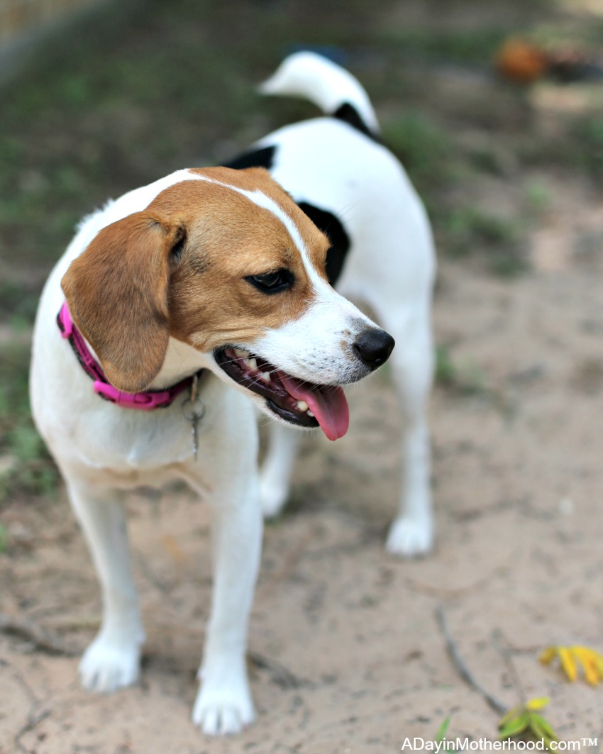 How to Make a Feral Dog Feel Loved and Safe - give her time