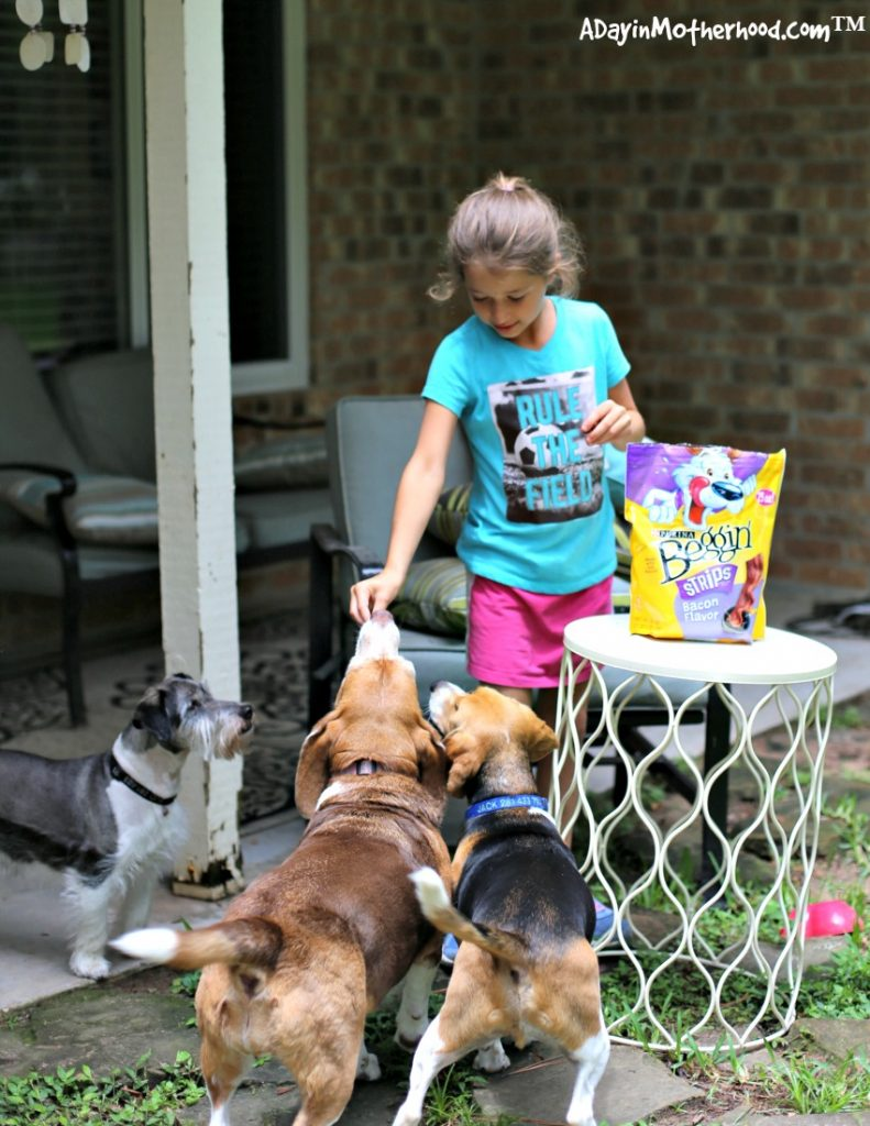 3 Way to Give Back to the Pets that Give Us So Much with lots of love