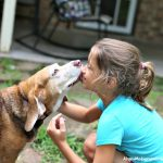 3 Way to Give Back to Pets that Give Us So Much
