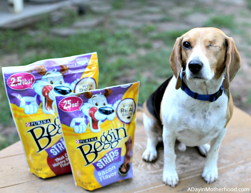 3 Way to Give Back to the Pets that Give Us So Much with good treats