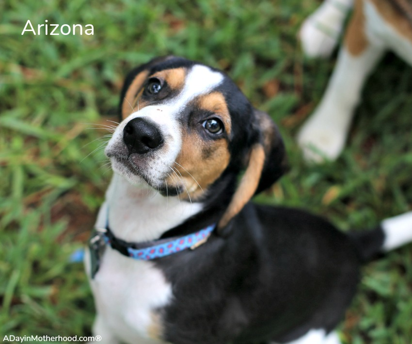 Why I Decided to Foster Puppies With Four Dogs of my Own like Arizona