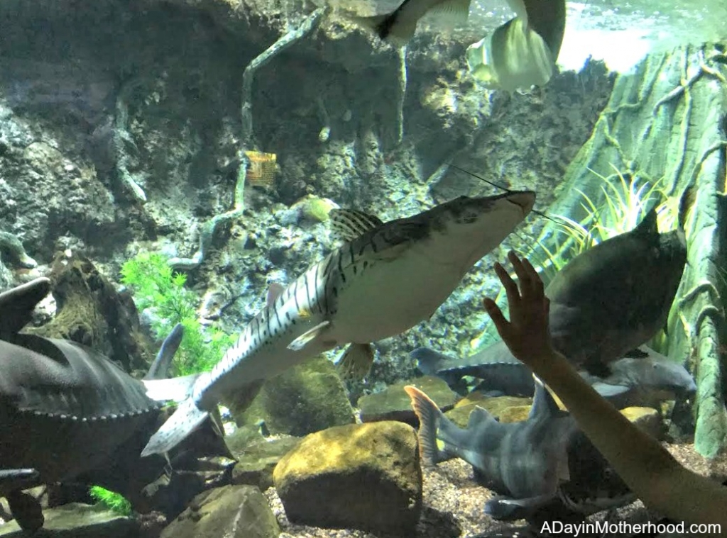 A Day at the Houston Aquarium with the Chevy Malibu and wonderful fish