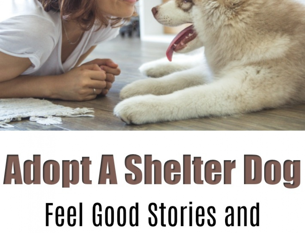 Adopt a Shelter Dog – Feel Good Stories and How You Can Help