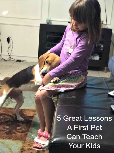 5 Great Lessons A First Pet Can Teach Your Kid