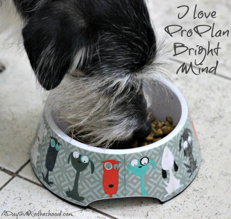 A Day in the Life of a Senior Dog Through His Eyes #BrightMind ad @PetSmart