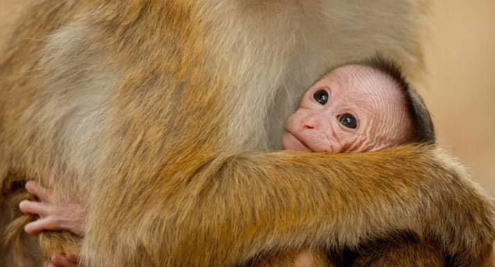 Monkey Kingdom is Out on DVD #MonkeyKingdom ad