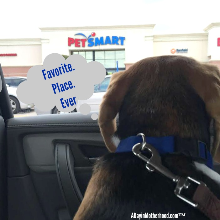 Visiting PetSmart is my dog's favorite thing to do! So I take them for love, treats, Purina ProPlan Savor Shredded Blends food and more! #PawsToSavor ad