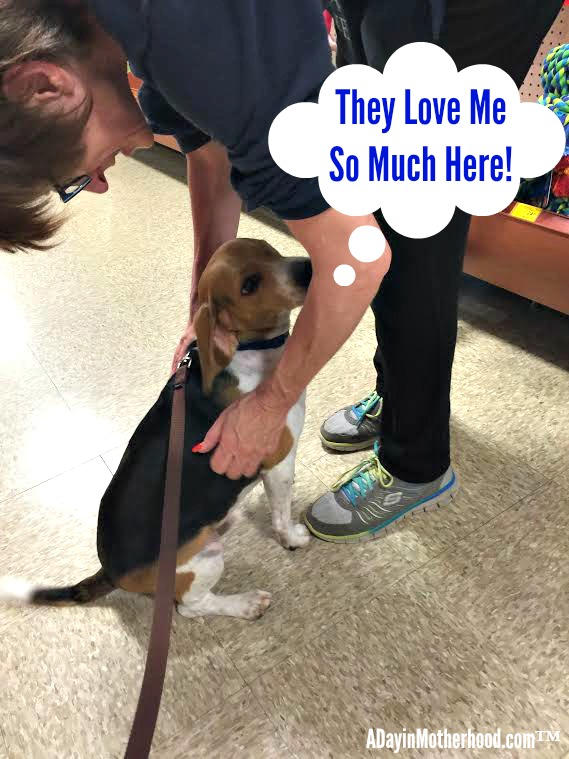 There is more than food and treats at PetSmart. There is love too! #PawsToSavor ad