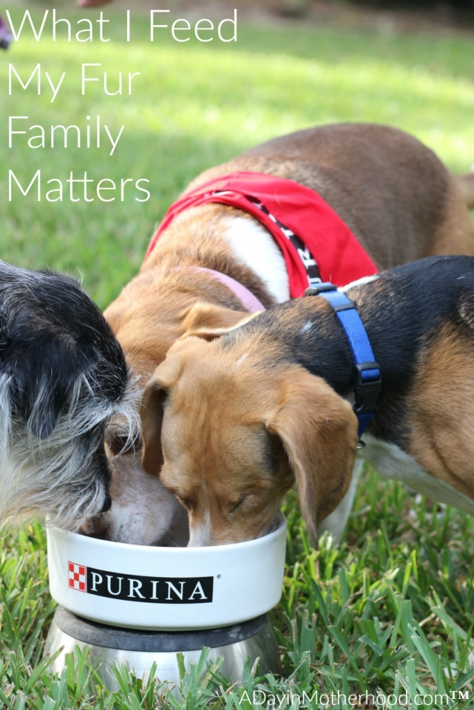 The people at Purina feed their dogs with total confidence. #MeetPurina ad