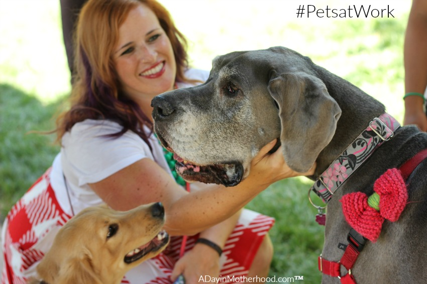 The pets are families at Purina - every day #MeetPurina ad