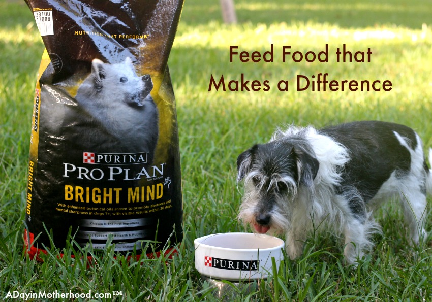Feed them BRIGHT MIND Adult 7+ to give them what they need.