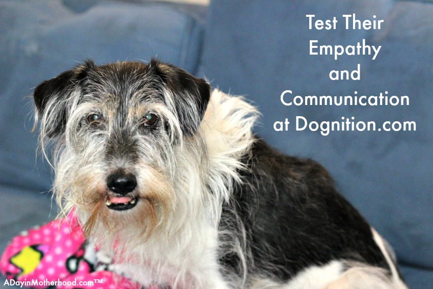 Dognition.com lets you test your dog. BRIGHT MIND Aduly 7+ info too!