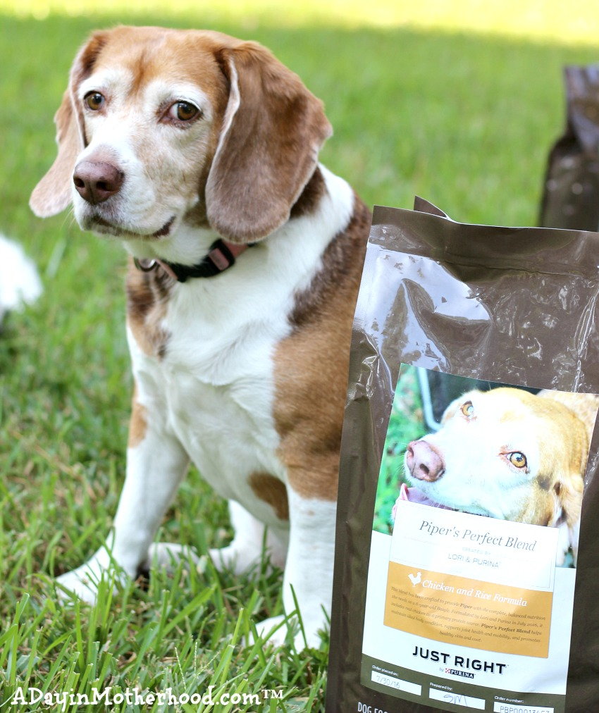 Piper loves her Purina Just Right Blend that I ordered just for her! #DogsofJustRight ad