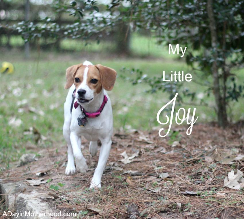My little Joy -I made her a DIY Dog Pillow