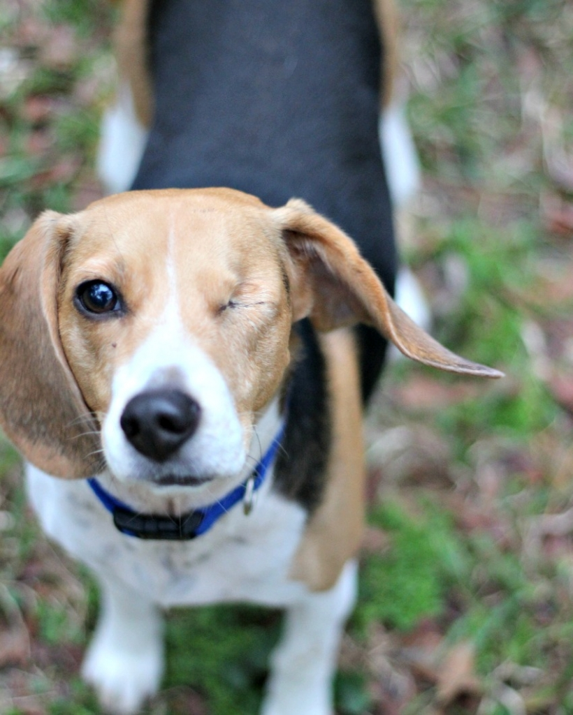 One Eyed Jack is a rescue with a story to tell like those on Finding Fido on Z Living