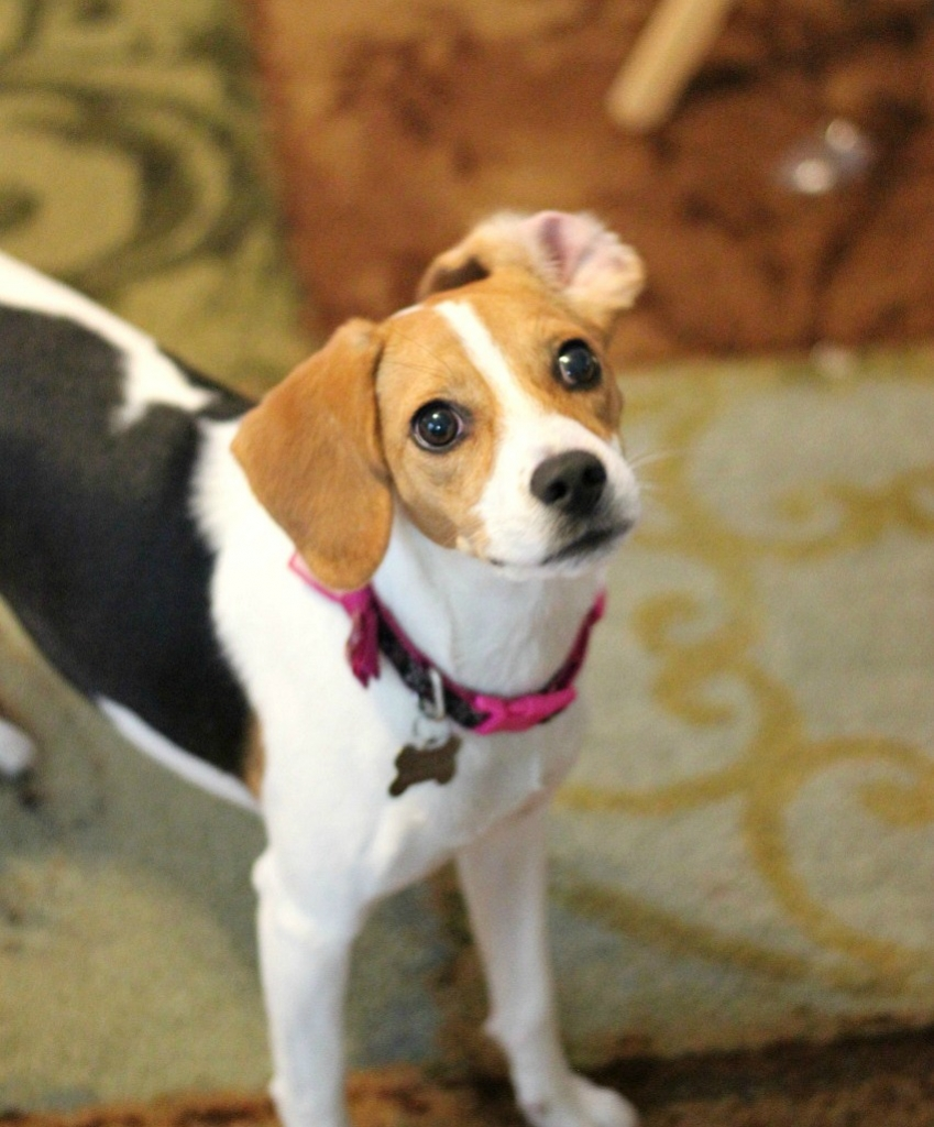 Finding Fido follows rescue dogs, like Joy, as they meet their forever family!