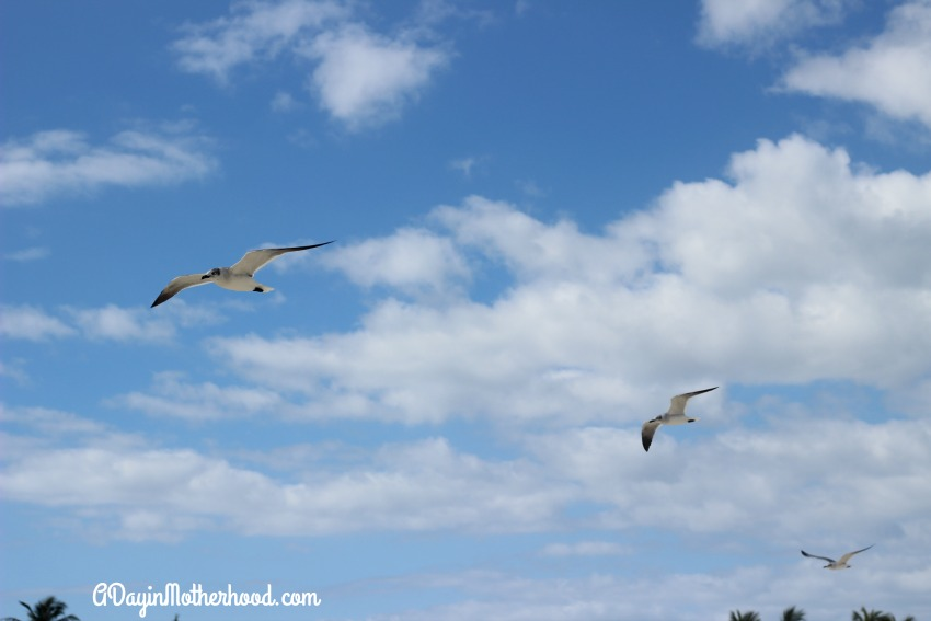 The birds add to the landscape of Castaway Cay