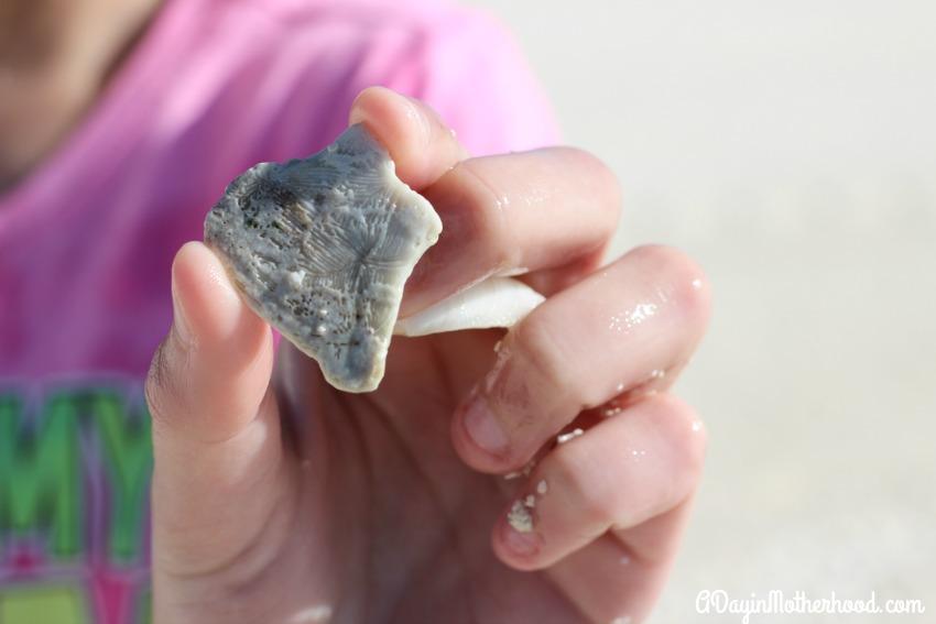 Find hidden treasures on Castaway Cay