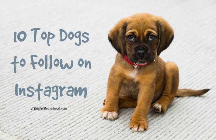 Check out these 10 Top Dogs to follow on Instagram