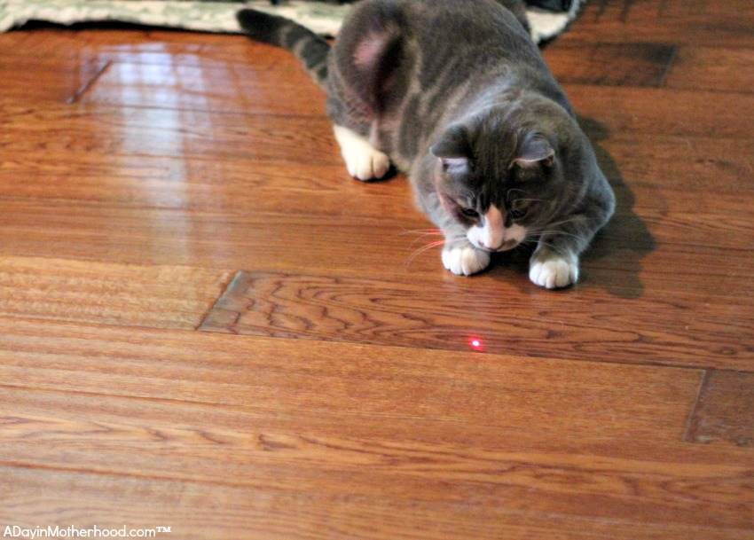 Automatic Cat Toys will entertain all day long!