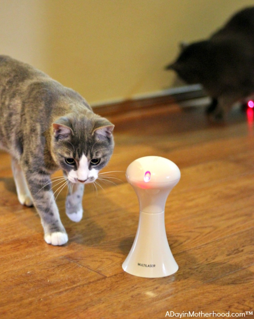 Automatic Cat Toys include Multi Laser which cats love
