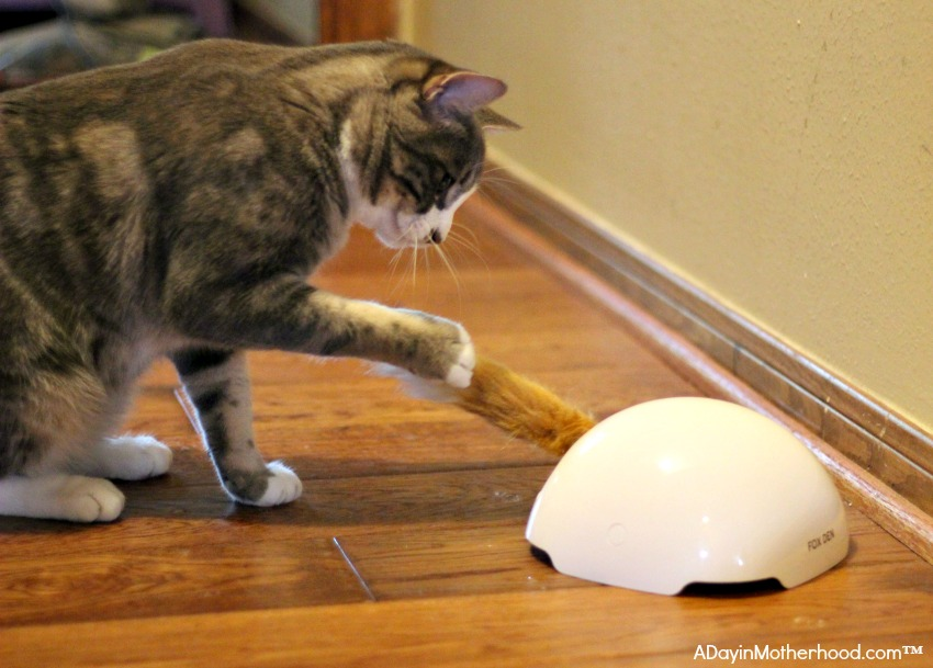 Automatic Cat Toys like Fox Den and Multi Laser are great for cats