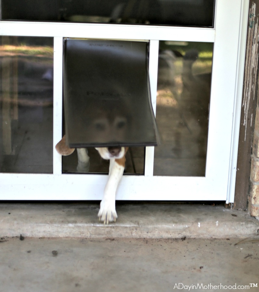 5 Tips for Managing Multiple Dogs includes installing a doggy door