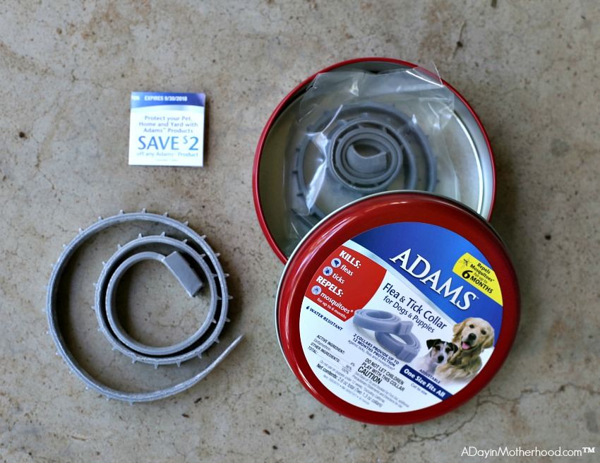 Look for the red tin and use these 5 Tips for Managing Multiple Dogs