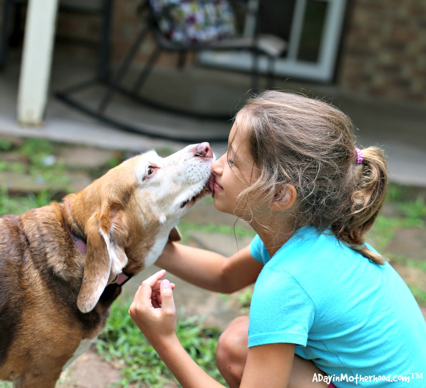 3 Way to Give Back to the Pets that Give Us So Much by giving them love