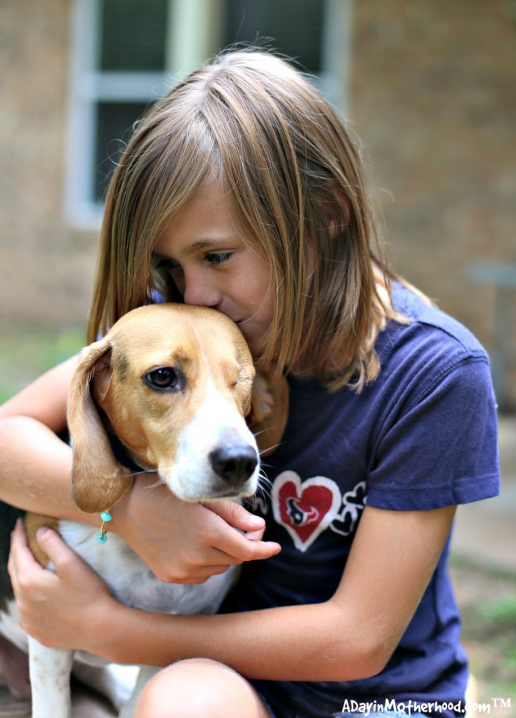 3 Way to Give Back to the Pets that Give Us So Much