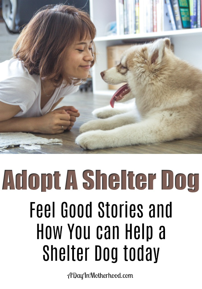 Adopt A Shelter Dog today.