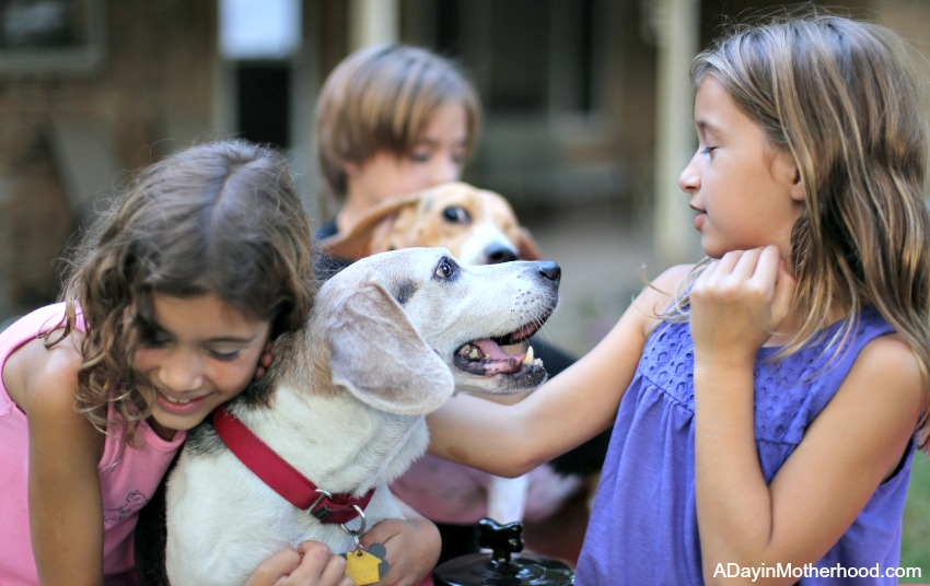 Celebrating Adopted Dogs the Way They Deserve to Be Celebrated with the kids