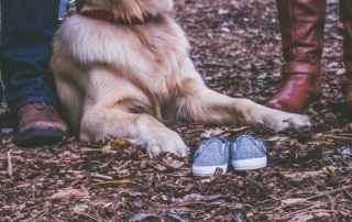 7 Dog breeds that are perfect for families.