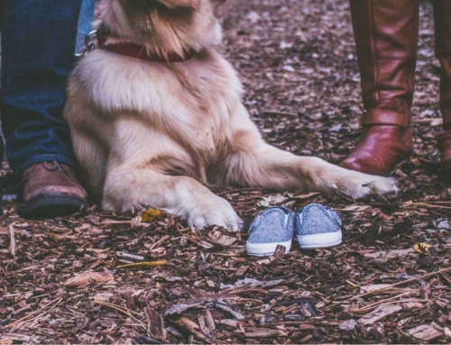 7 Dog Breeds That are Perfect for Families