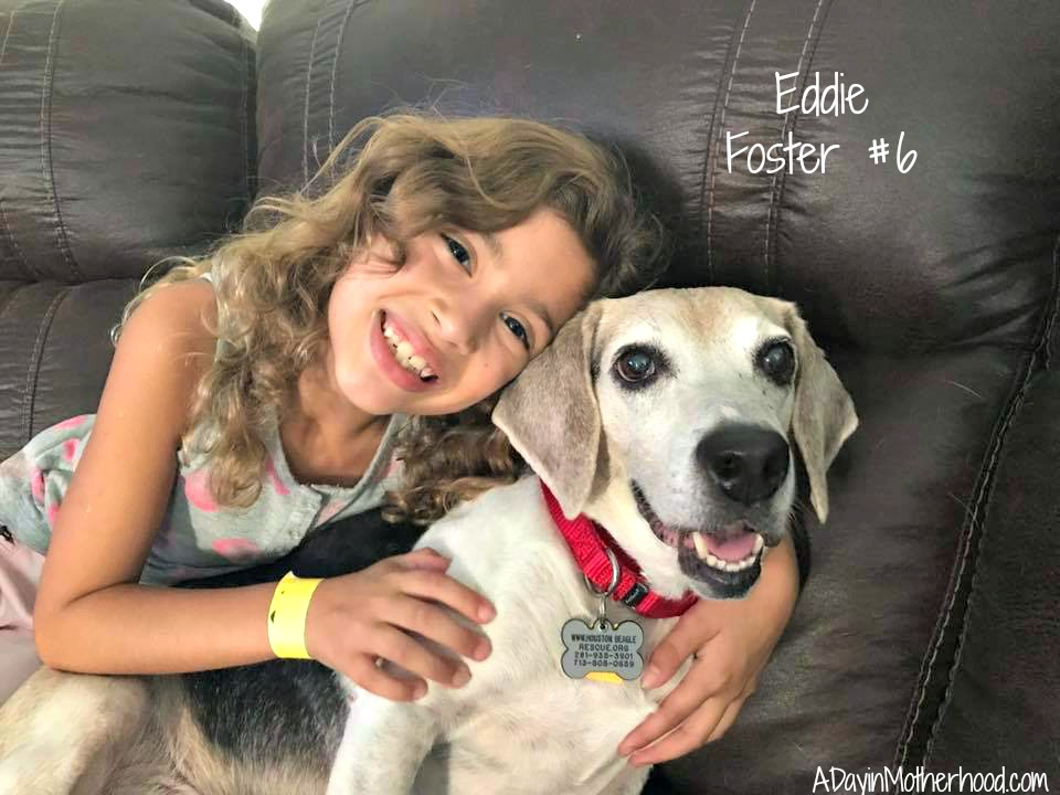 How to Train a Dog to be a Foster Brother by One Eyed Jack and eddie