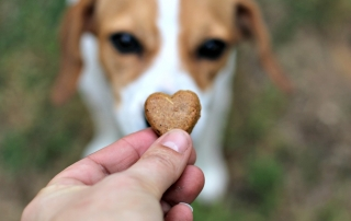 Treat Your Pets This Valentine's Day with Treats they Love