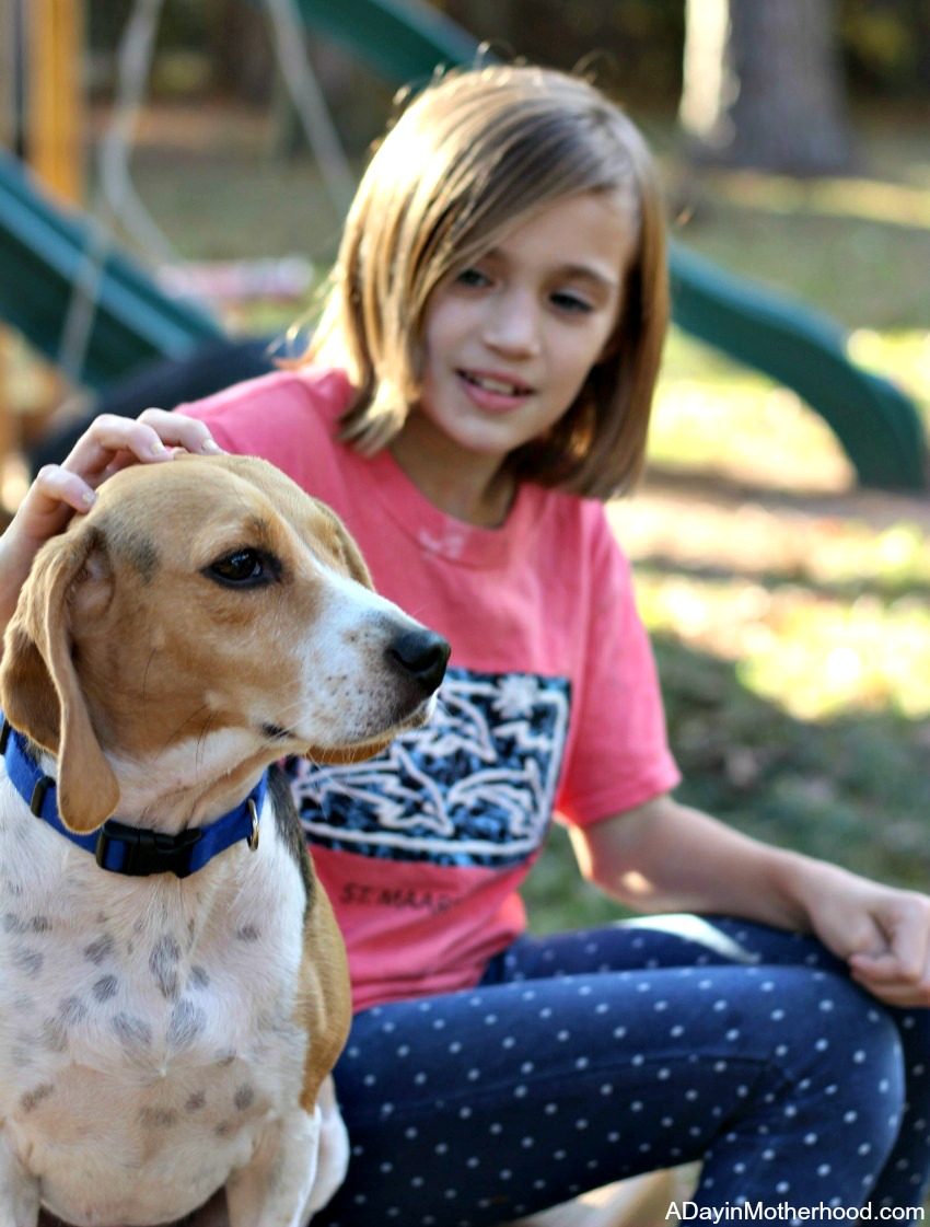 5 Tips to Help Make Multiple Dogs Work for Your Family like Katie and Jack