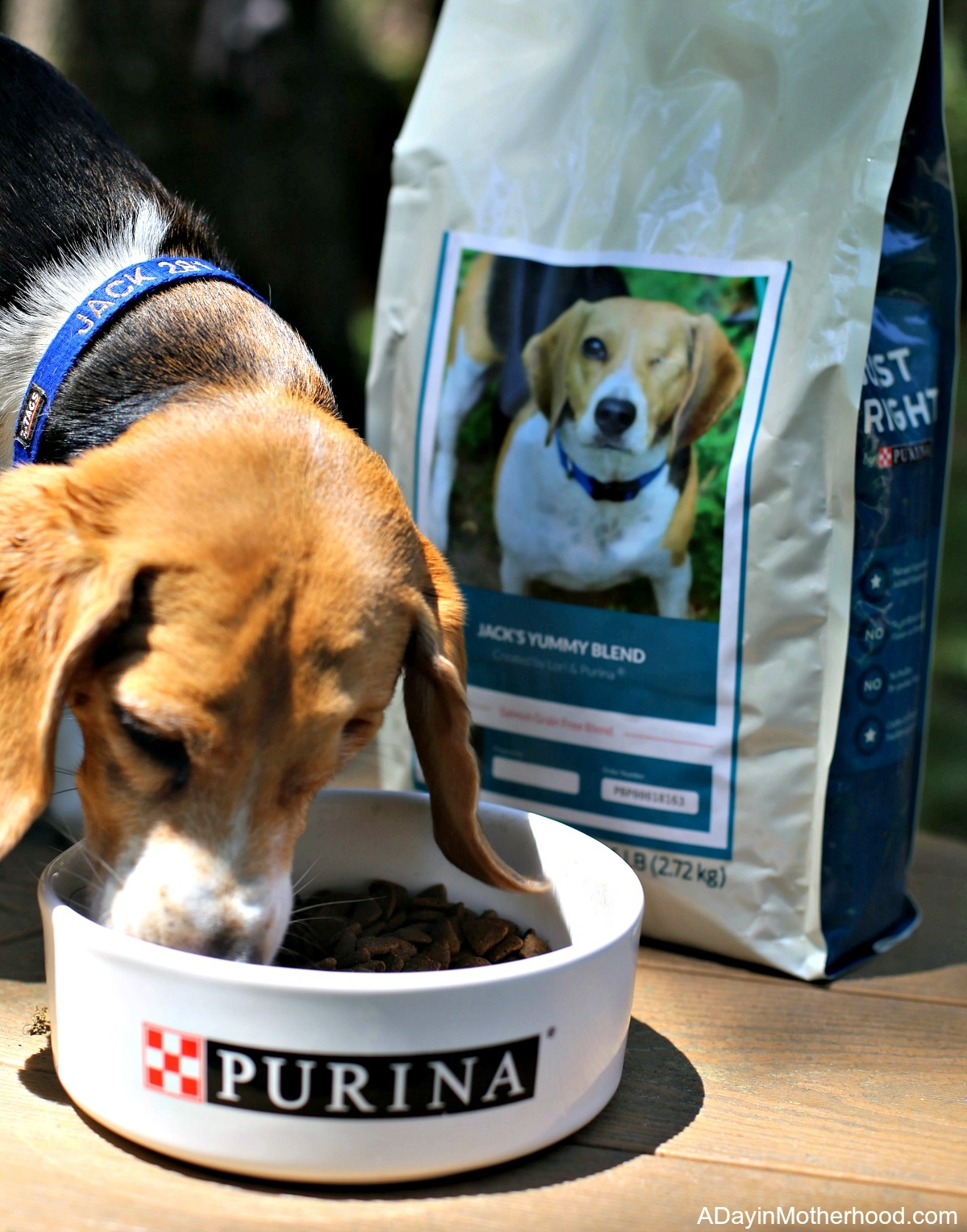 3 Things You Should Do for Your Adopted Dog with Purina