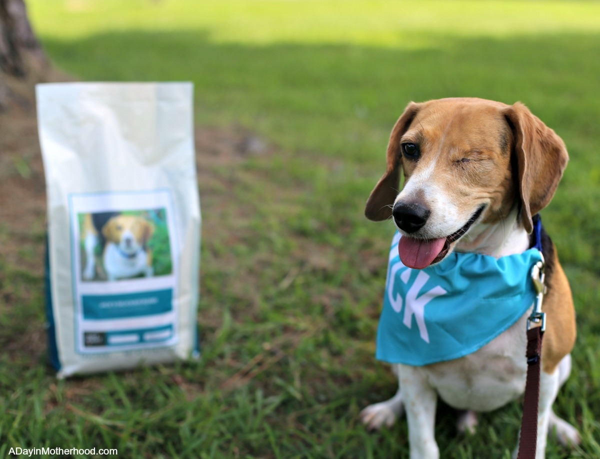 4 Benefits of Taking the Dog on a Walk and his food