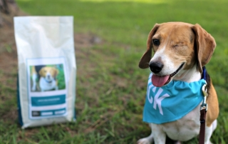 4 Benefits of Taking Your Dog on a Walk and his food