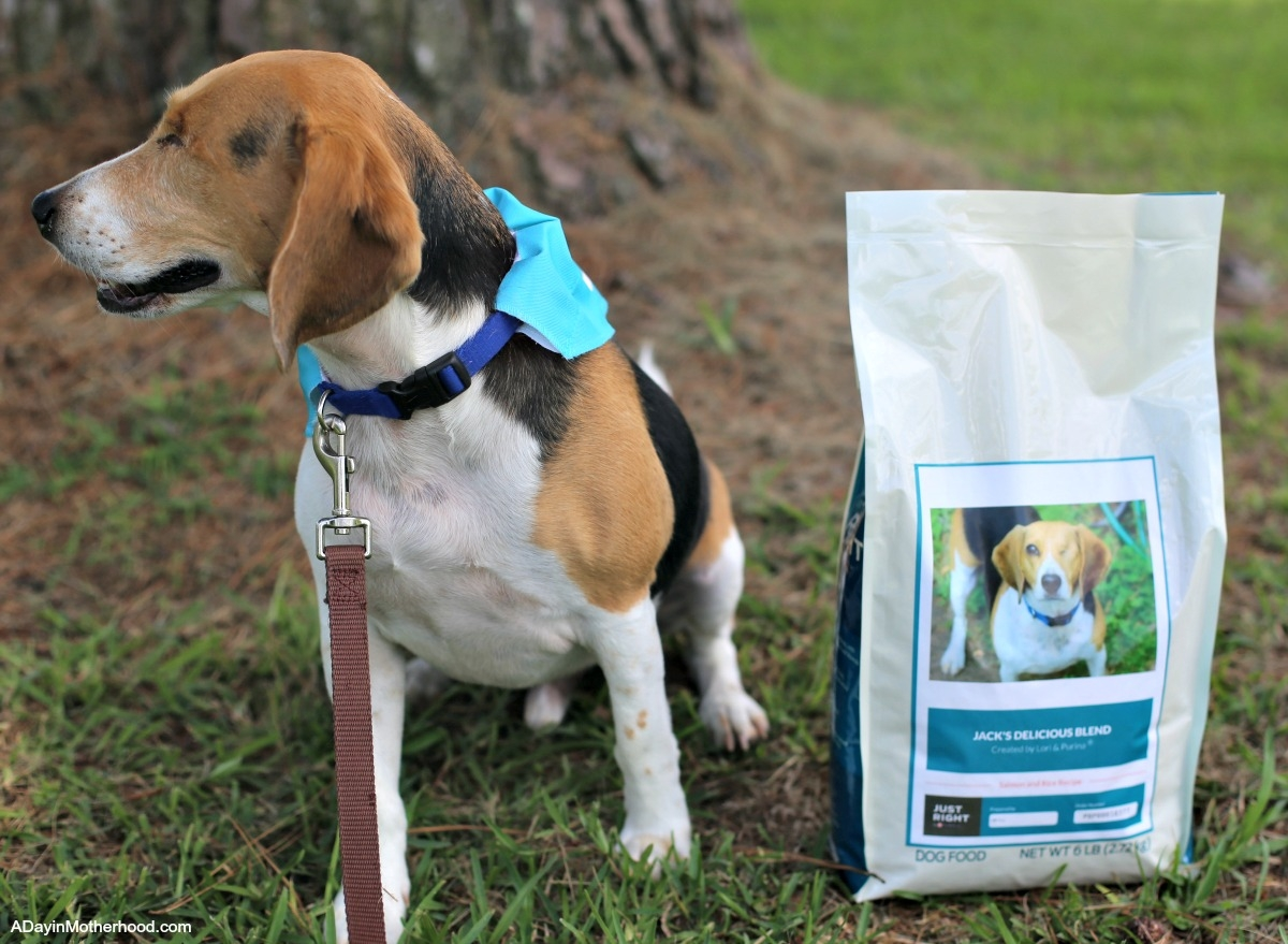 4 Benefits of Taking the Dog on a Walk with Just Right by Purina