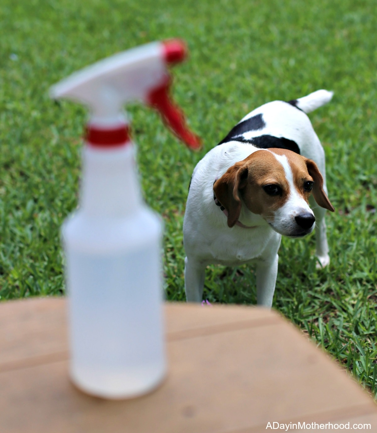 Tips for Including Dogs in a a Summer BBQ with a water bottle