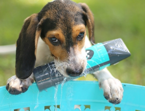 How Often Should I Bathe My Puppy?
