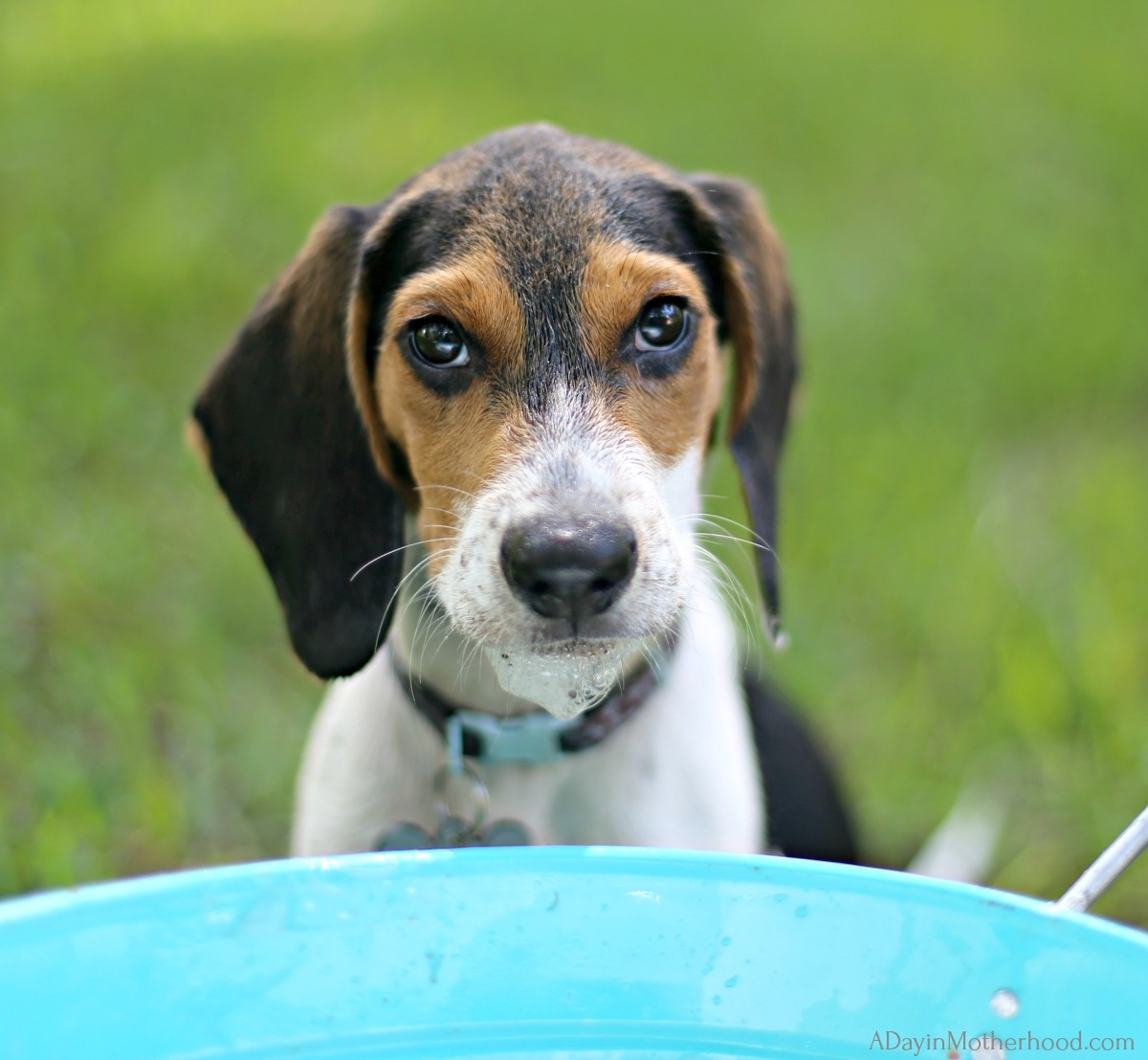 How Often Should I Bathe My Puppy? and with what product?